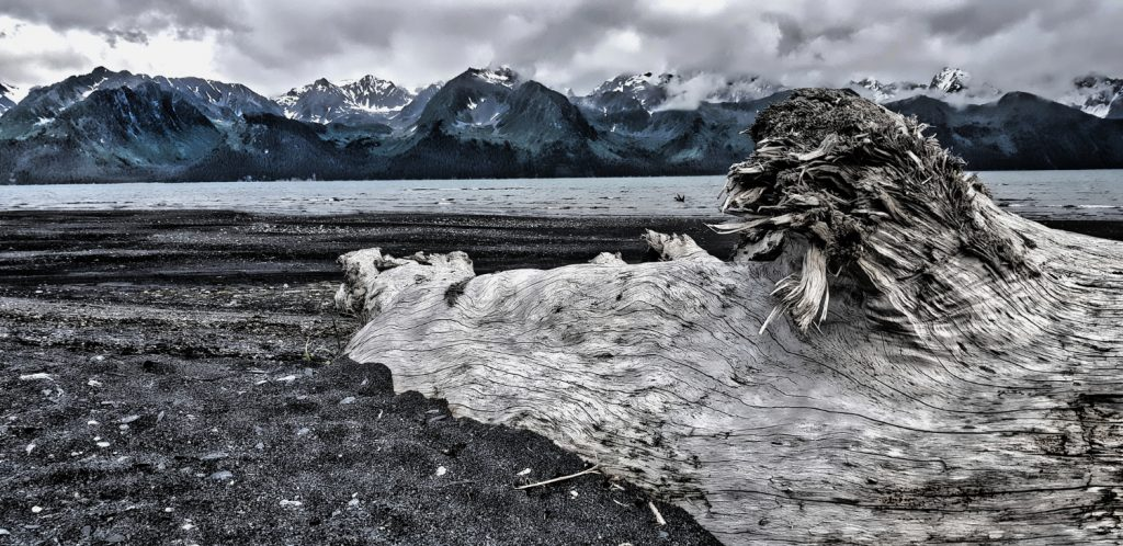 Cains-Head-hiking-Trail-Seward-Alaska-Driftwood-on-Beach