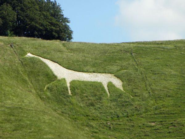White Horse Trail White Horse at Cherhill