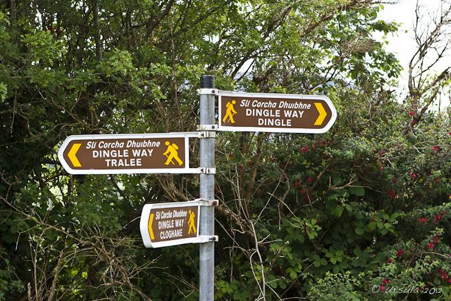 Dingle Way Ireland 01