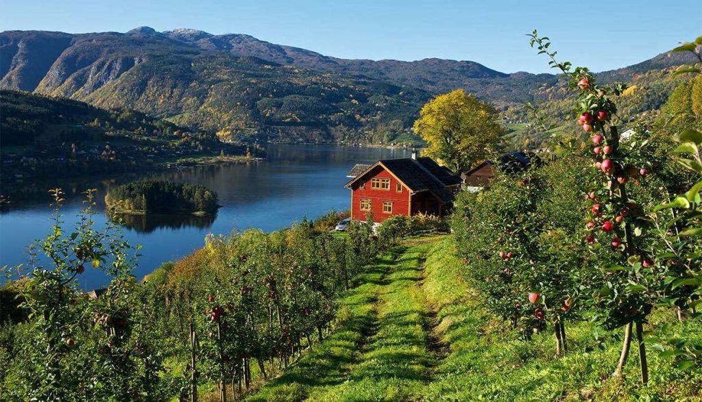 Hardanger Fruit Trail Norway 02
