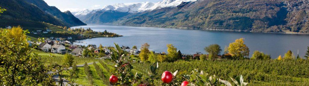 Hardanger Fruit Trail Norway 03