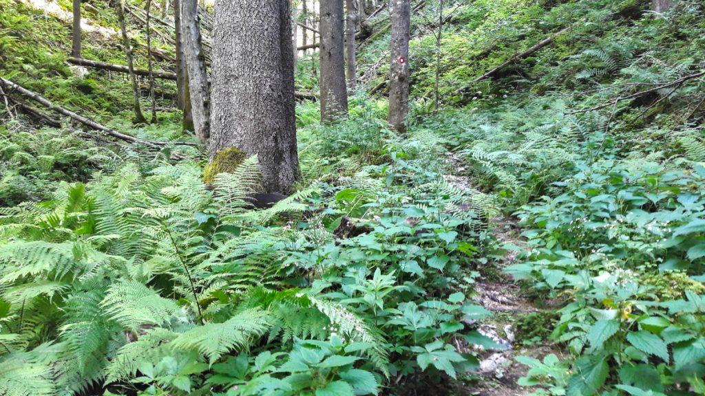 Triglav National Park - Day 1 - Pokljuka Gorge - Lost World