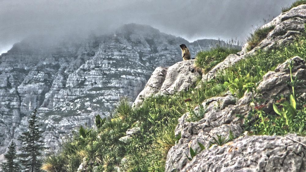 Triglav National Park - GroundHogs